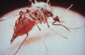 Danskere dropper malariamedicin