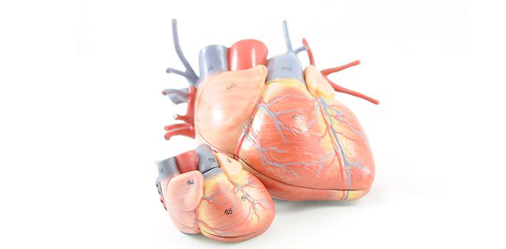 Hver tredje med hjertesvigt vender ikke tilbage til arbejdet